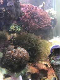 the biggest discovery in reefkeeping since the protein skimmer