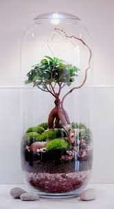 15 incredible terrariums that will truly amaze you
