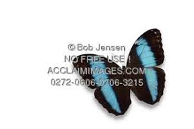 photo of morpho butterfly with shadow with white background