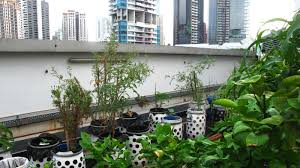 6000 Square Feet And Higher Urban Farms Build Resilience Within Singapore U0027s Fragile Food