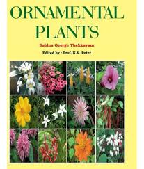ornamental plants buy ornamental plants at low price in