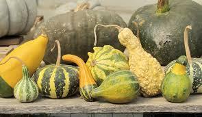 decorative gourds jpg 4000 2315 temp board