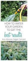 206 best gardening tips images on pinterest gardening flower