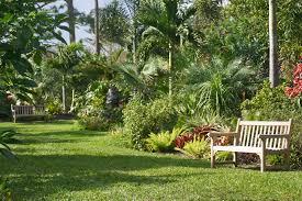 tropical foliage border mounts botanical gardenmounts botanical