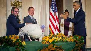 what happens to the turkeys pardoned by president obama abc news