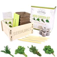 amazon com enterra supply herb garden seed starter kit u0026 wood