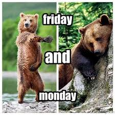 Funny Bear Memes - 55 crazy friday memes