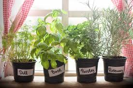 vermont garden journal 6 tips for starting a windowsill herb