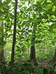 native plant solutions as world warms how do we decide when a plant is native yale e360