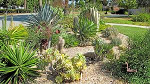 native southern california plants experts offer advice for drought tolerant landscaping in southern