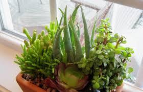 the best indoor plants favorite flowering house plants a to z tags flowering house