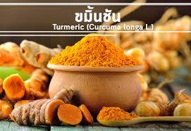 curcuma cuisine ขม นช น turmeric curcuma longa l medica inspired by