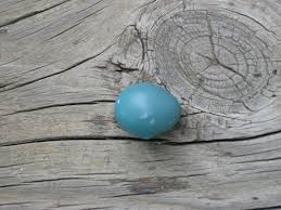 color in our world robin egg blue