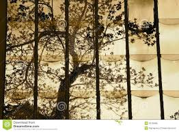 tree the stained glass window stock photo image of sepia
