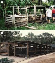 pig housing in badu island a typical backyard pig pen in