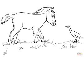 miniature horse foal and bird coloring page free printable