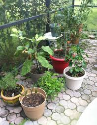 Patio Container Garden Ideas Fall Patio Container Garden Ideas Patio Container Vegetable