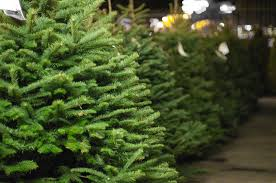 live christmas trees live greenery disposal