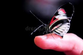 butterfly on finger stock image image of butterflies 65000005