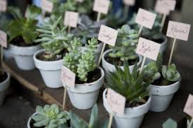 wedding favors wedding plant favors how to grow your own wedding favors