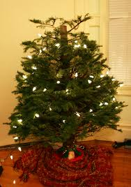 half christmas tree a bit whimsy bottom half christmas tree