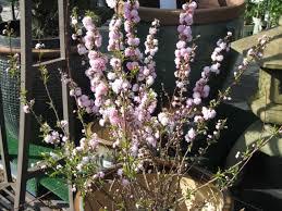 Flowering Shrubs For Partial Sun - shrubs for shade u2013 phelan gardens