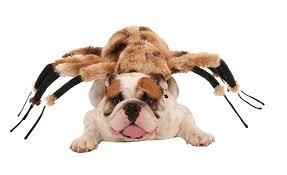 Dog Spider Halloween Costume Pet Halloween Costumes Dog Halloween Costumes