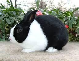 Cool Pets Rabbit Hutch 57 Best Large Indoor Rabbit Hutch Images On Pinterest