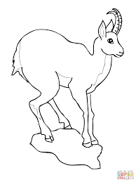 european goat antelope chamois coloring page free printable