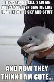 Shark Meme - regret shark meme on imgur