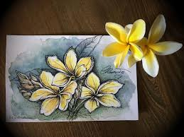 plumeria flowers plumeria flower painting challenge yesterdayafter