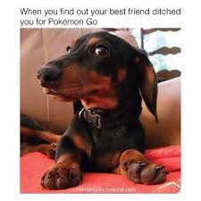 Dachshund Meme - fresh 27 weiner dog meme wallpaper site wallpaper site