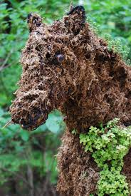 Horse Topiary You Can Go Home Again State By State Gardening Web Articles