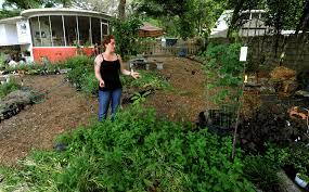 outdoor retreat mckenna garden ideas citrus containers amys office