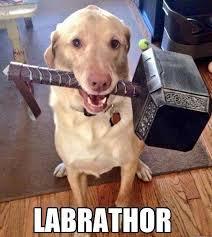 Meme Dog - dog meme