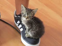 Cute Cat Meme Generator - cute cat meme blank template imgflip