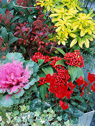 replanting your pots for winter homes and property