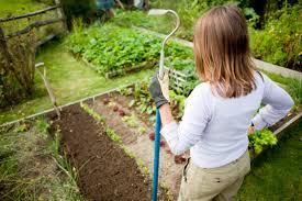 start your own diy winter veggie patch