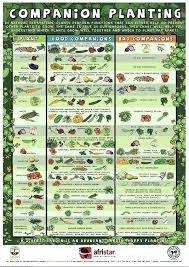herb growing chart what to grow in a garden alexstand club