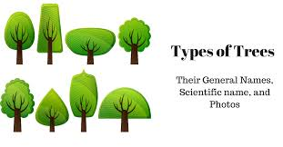 different types of trees and their names preparmy