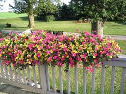 best 25 deck railing planters ideas on pinterest railing