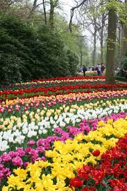 Photos Flowers Gardens by 31 Best Photos Of Beautiful Flower Garden In The Holland Images On