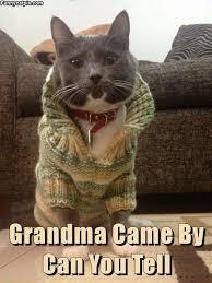 Good Cat Meme - good ole grandma you look awesome lol pinteres