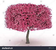 Purple Leaf Peach Tree by 3d Render Peach Blossom No Leaves Stock Illustration 95379283