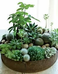 resume modernos terrarios suculentas pin de moni doniz en cactus pinterest terrarios suculentas y