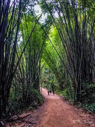 khao sok national park southern thailand u0027s hidden sanctuary u2013 2