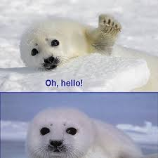 Baby Seal Meme - baby seal loves you by maethril meme center