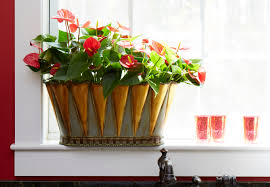 bring the outdoors in for earth day with beautiful houseplants