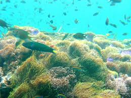 padi open water diver course indepth dive centre phuket idc phuket