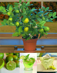 online buy wholesale organic indoor gardening from china organic